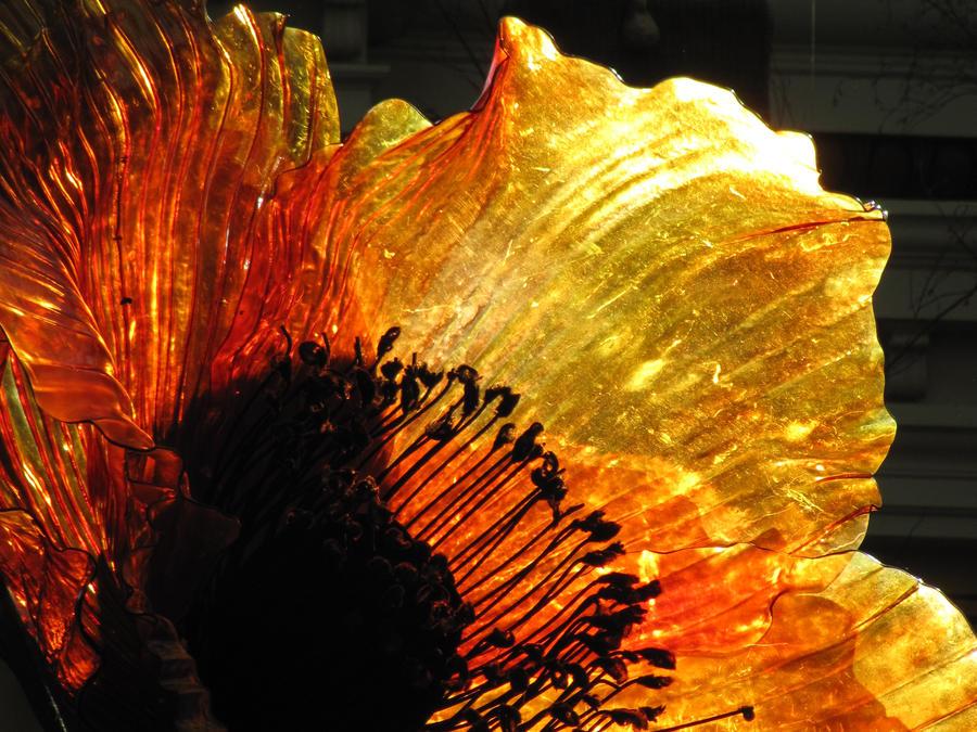 Glass Flowers by eseertnav