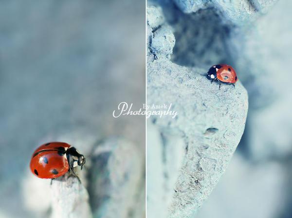 Ladybird. by AniekPhotography