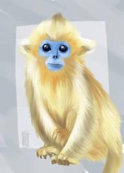 Snubb-nosed Monkey baby