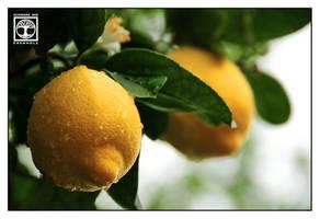Lemon Tree by SchwarzWieEbenholZ