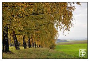 Avenue d'Or by SchwarzWieEbenholZ