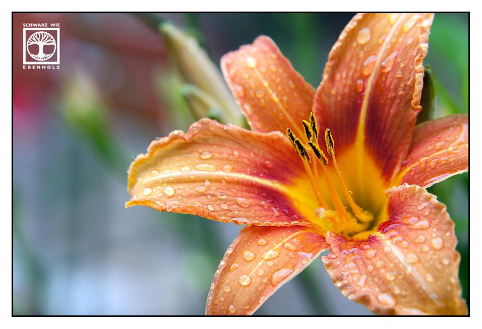 Cocktail Flower by SchwarzWieEbenholZ