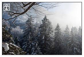 Snowy Trees by SchwarzWieEbenholZ