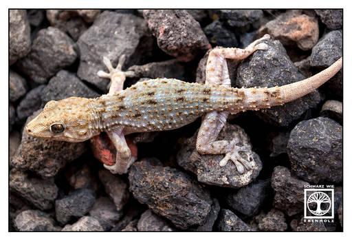 Gecko Love