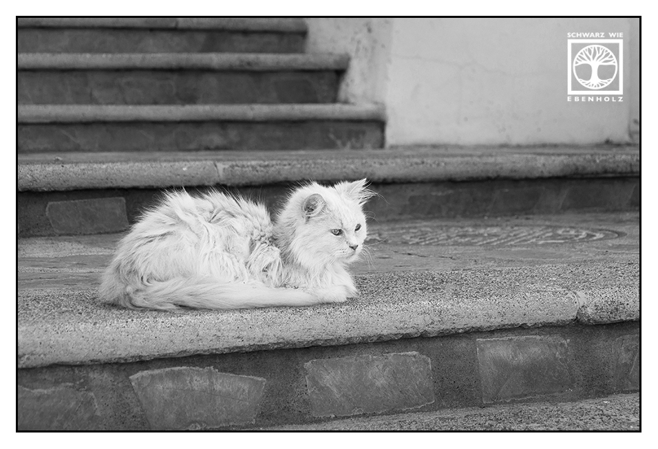 Hot Stones make Happy Cats.bw by SchwarzWieEbenholZ