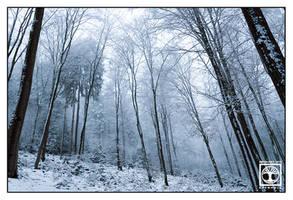 Bright White Forest by SchwarzWieEbenholZ