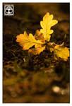Golden Oak by SchwarzWieEbenholZ