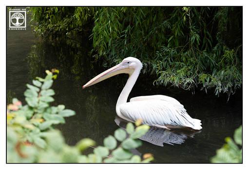 Pelicanoe