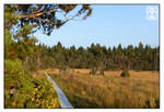 The Narrow Strip of Land