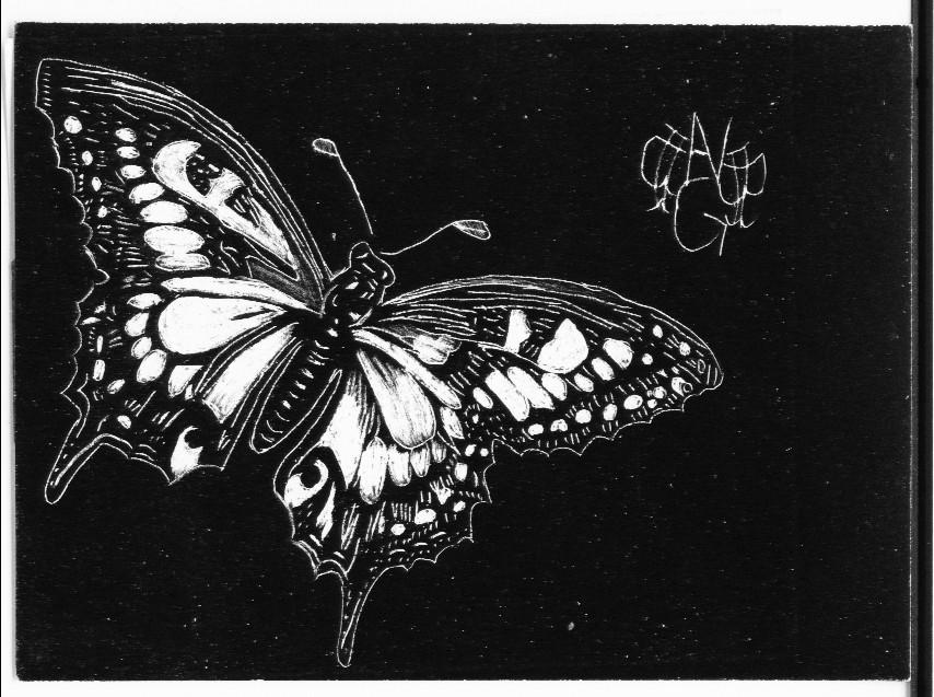 Butterfly scratchboard - photo#5