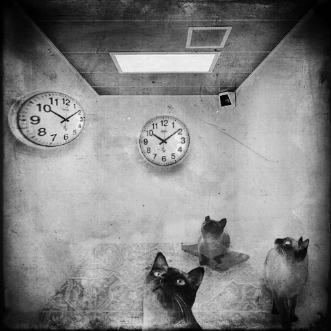 Kot W Pustym Mieszkaniu By Jakubtabisz On Deviantart