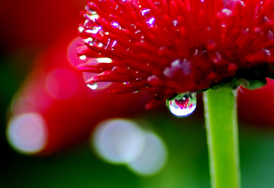 Drops on Flowers 03 by Taitai03