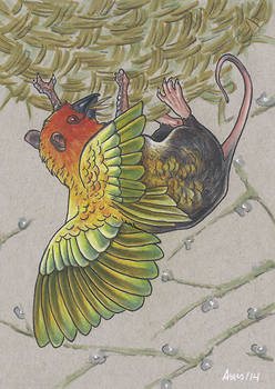 Weaver bird gryphon