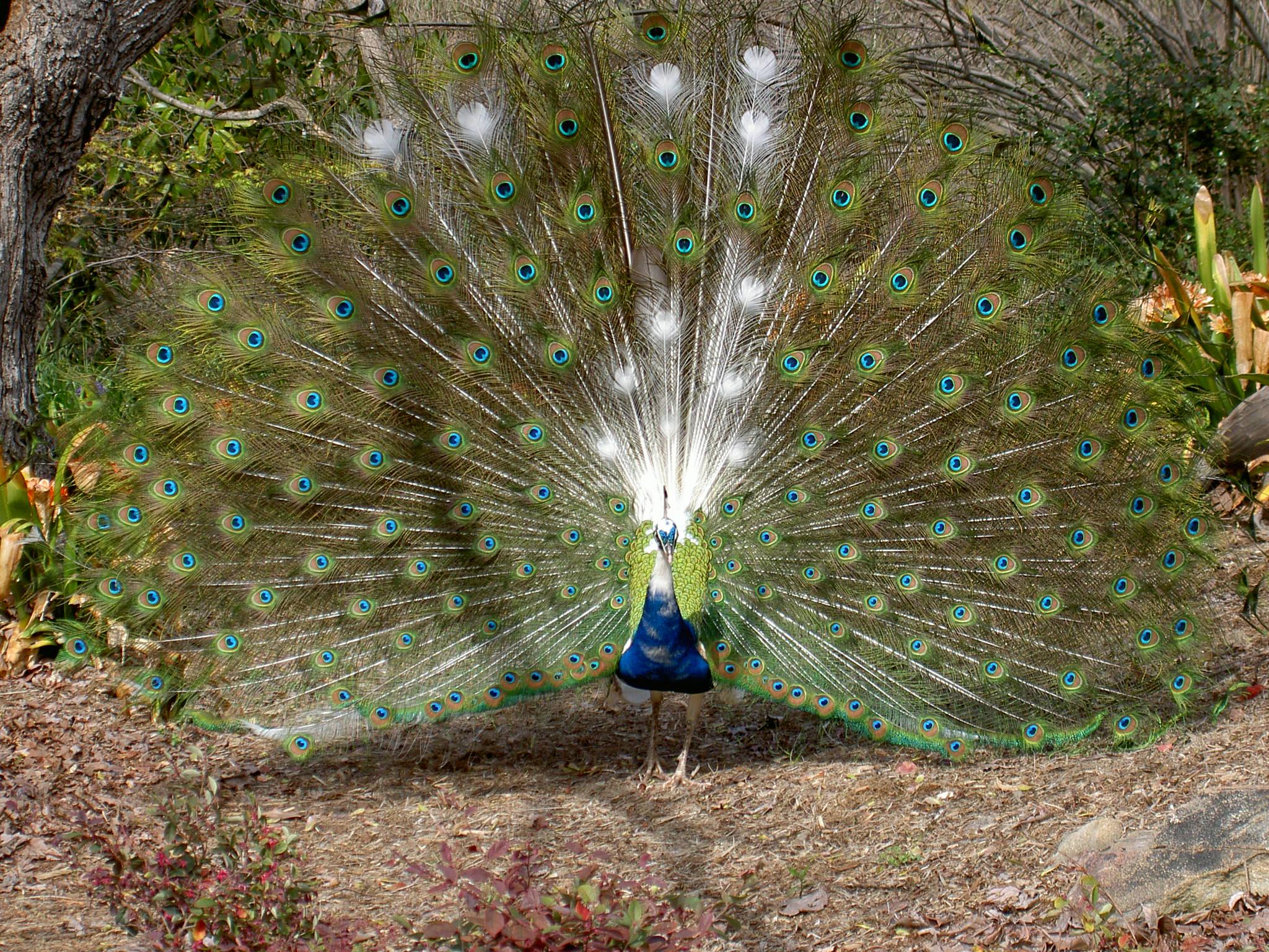 Now thats a bird by TheGuruTiger