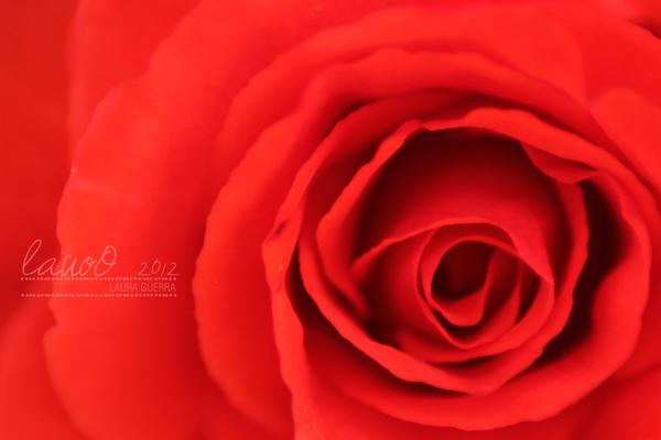 Rojo by lauoO