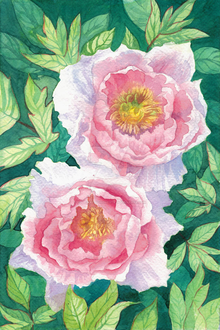Peonies by CultivatingHonesty