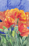 Poppies by CultivatingHonesty