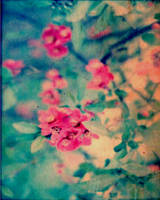 hawthorn blossoms by Toadsmoothy2