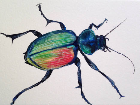 Bug again