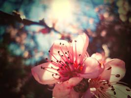 Bendita Primavera