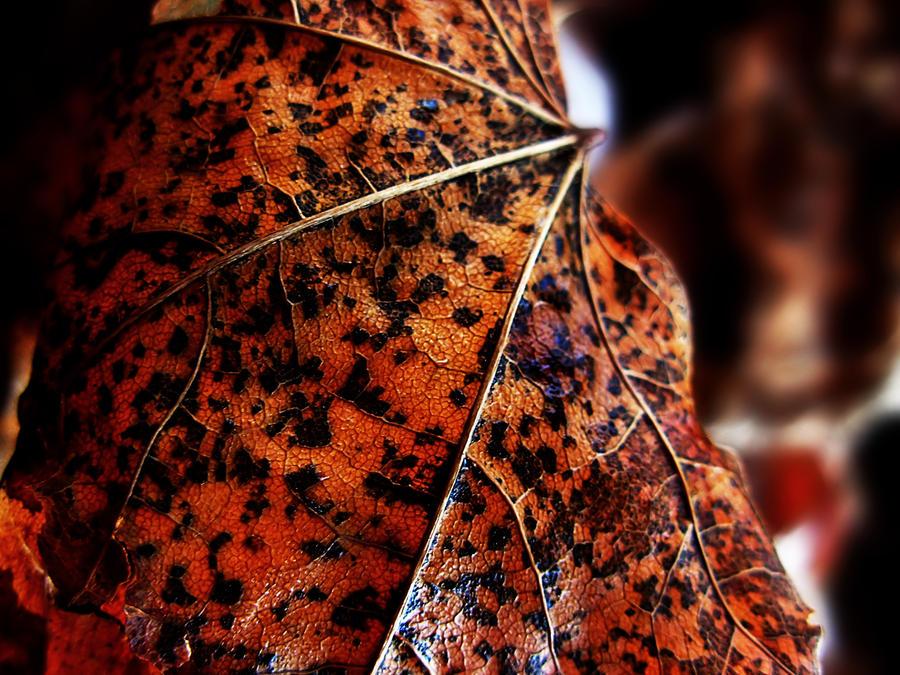 1 Autumn Contest by Anileya