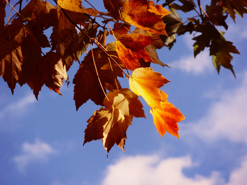 5 Autumn Contest by Anileya