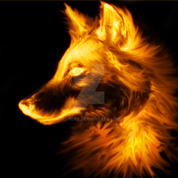 wolf by tshuax