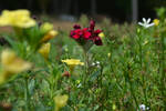 A Lonely Flower. by dreamingworld2008