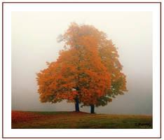 Autumn red by Mizillax