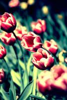 Spirit of Spring by dansch