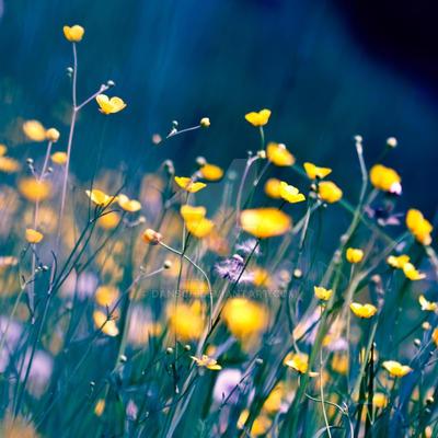 Meadow of Dreams by dansch