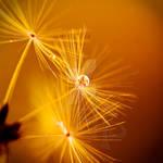 Light my Fire by dansch