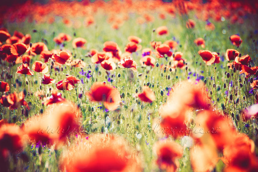 Field of Dreams by dansch