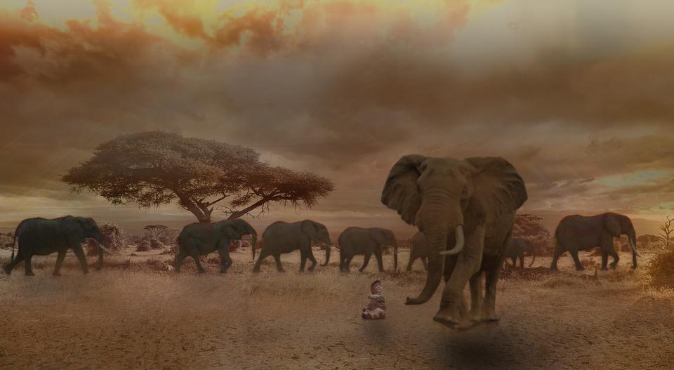 Africa by fabienne1810