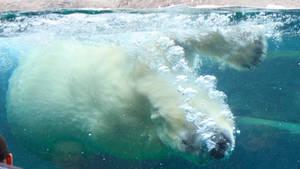 Under water by Mattlis