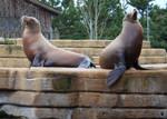 Look at us - sea lions