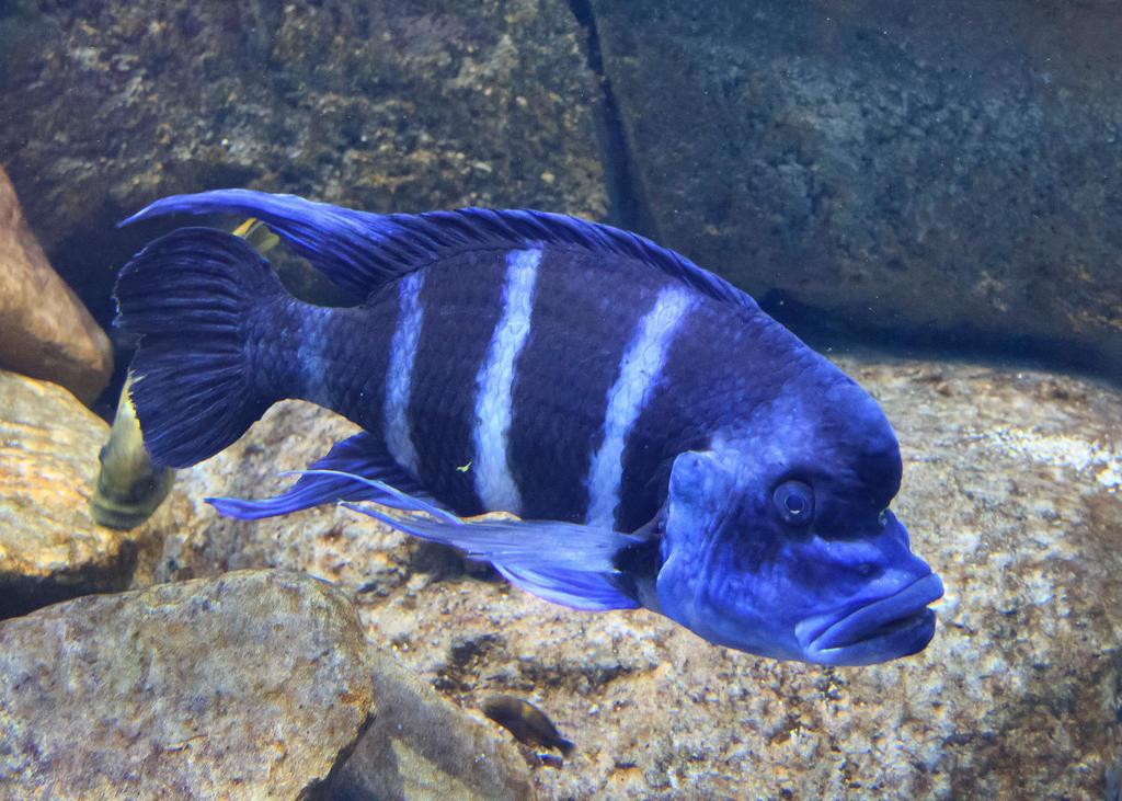 Big Blue Fish By Mattlis On Deviantart