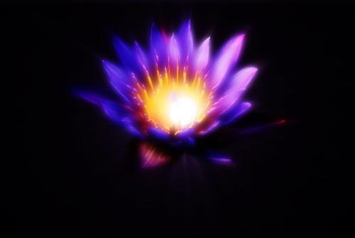 Purple Lotus Flower by Litejk