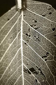 memory leaf
