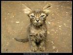 My Dirty Little Kitty Friend