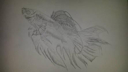 van gogh fish