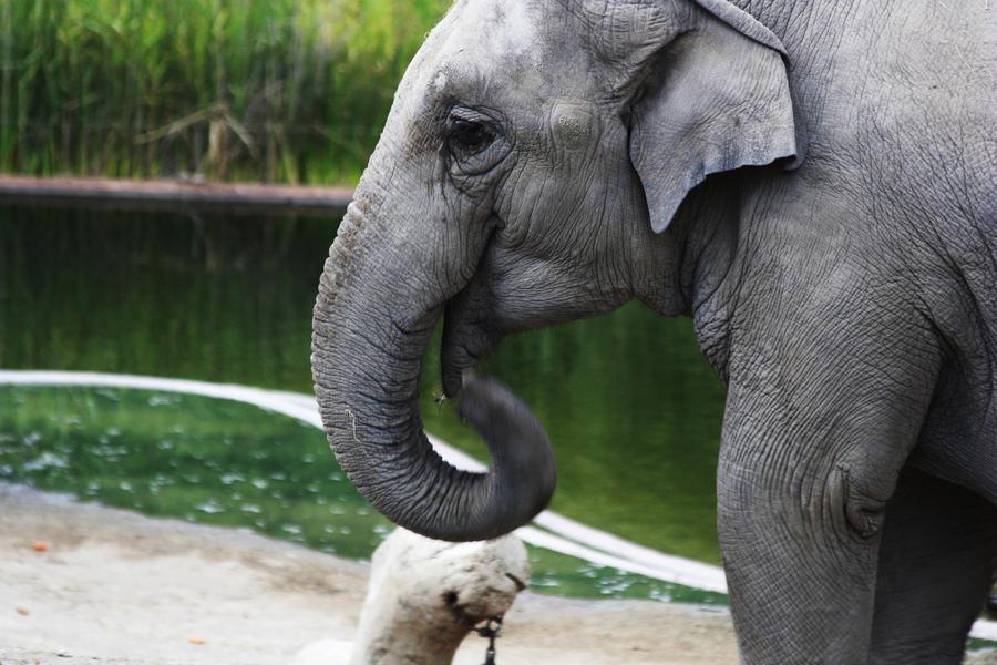 Elegant elephant by arinqa