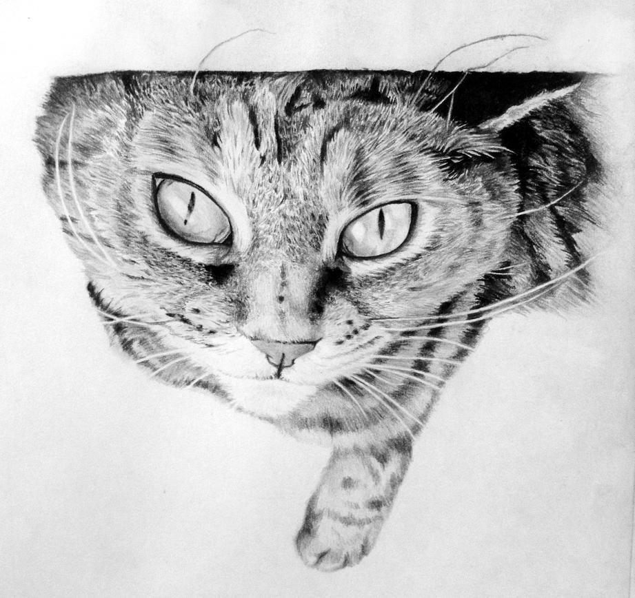 Tabby Cat Sketch by TrentRedmon