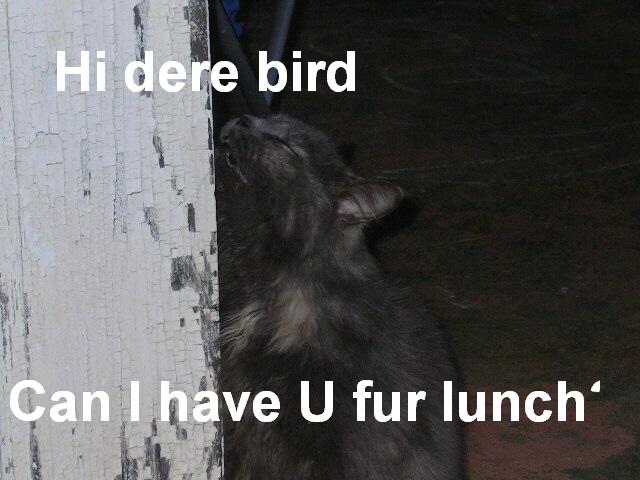 Hi dere bird by RavenluvsSesshomaru