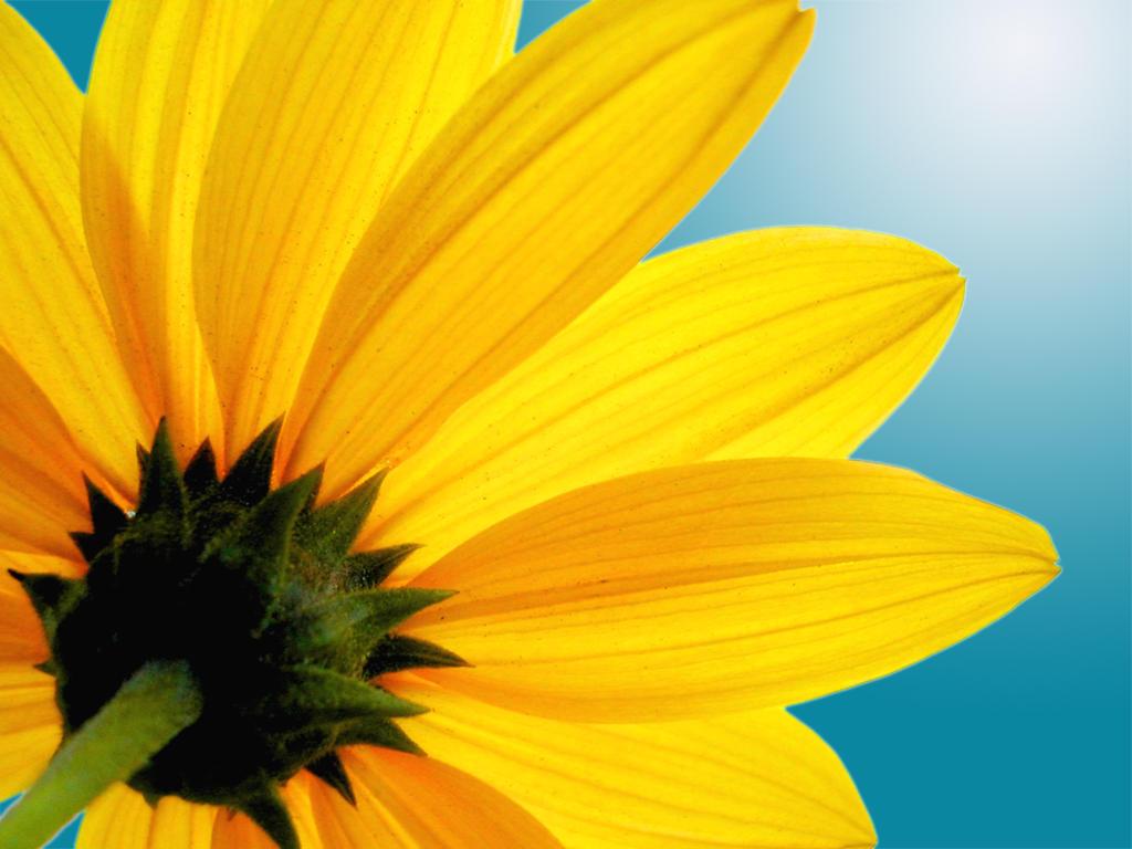 Yellow Flower by almen
