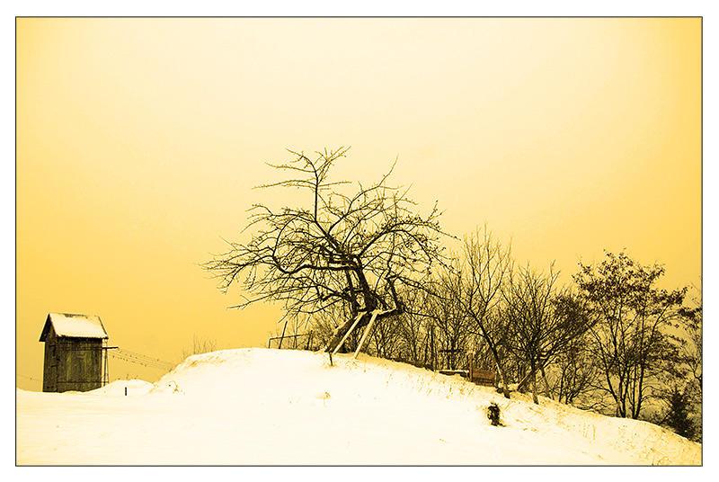 Winter Wondeland II
