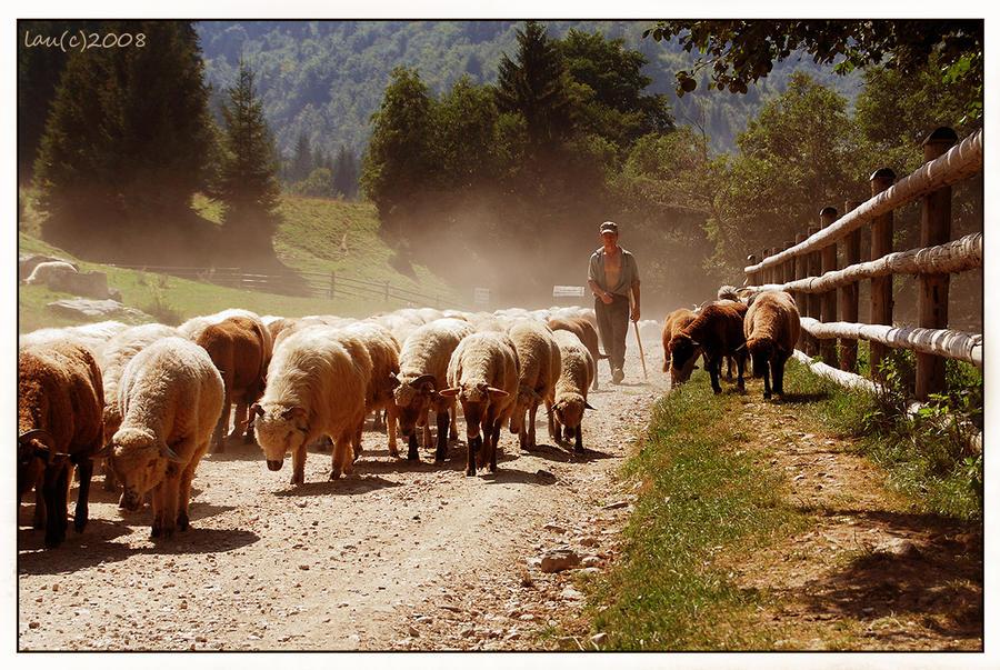 Shepherd from Bran