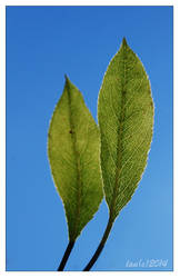 Leaves by vendoritza