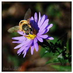 Still Bee by vendoritza