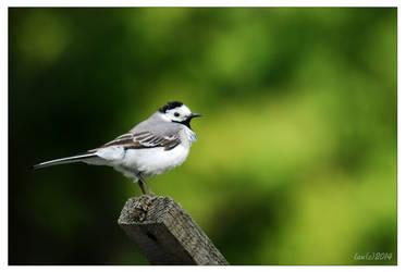 A little bird by vendoritza